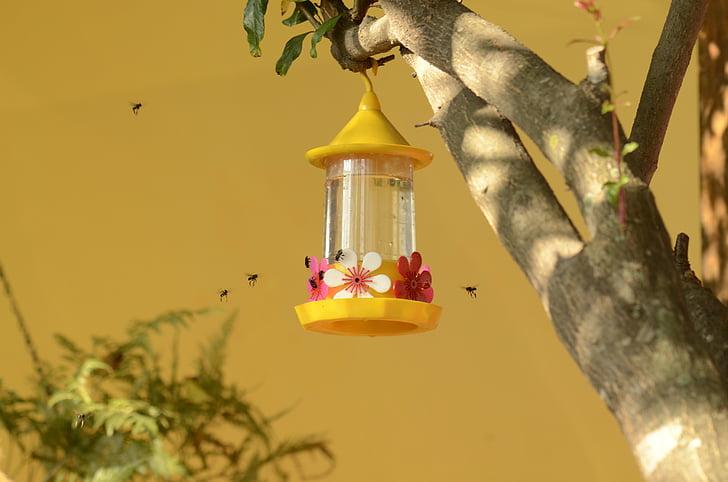 питною фонтанчик колібрі, бджоли, нектар, Природа