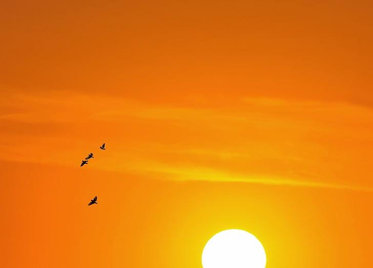 залез, Уест, природата, пейзаж, небе, плаж, Мар