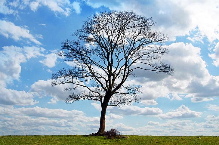 дерево, синій, небо, відділення, Відділення і банкомати, Хмара, хмари