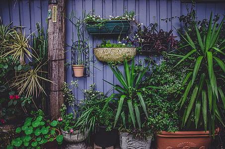 Flora, vasi di fiori, fiori, giardino, foglie, pianta, pot di fiore
