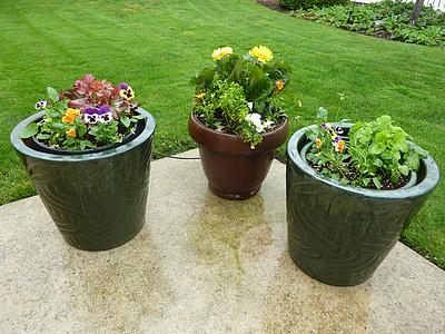 květiny, hrnce, Patio, Hrnkové, kontejnery, zahrada, závod