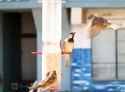 birds, pecking order, bird feeder, animals, eating, feeding, avian