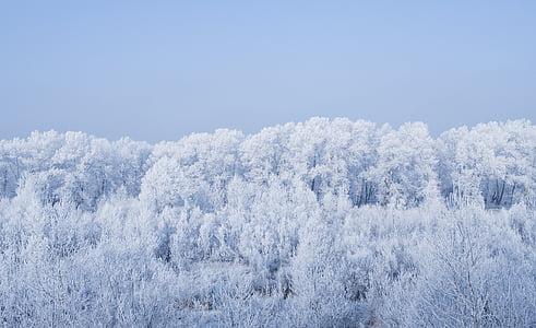 pozimi, Frost, ze, hladno, gozd, krajine, dreves