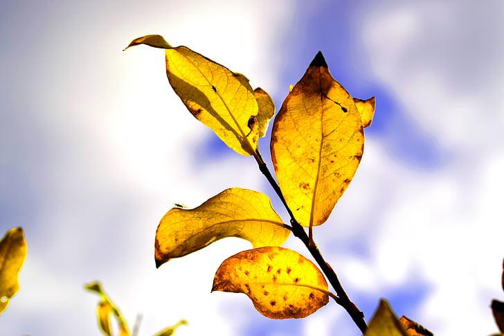 Príroda, jeseň, jesenné lístie, Jesenná príroda