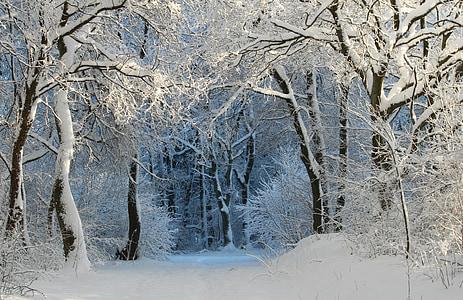 Inverno, invernal, mágica da neve, magia do inverno, sonho de inverno, floresta de inverno, Nevado