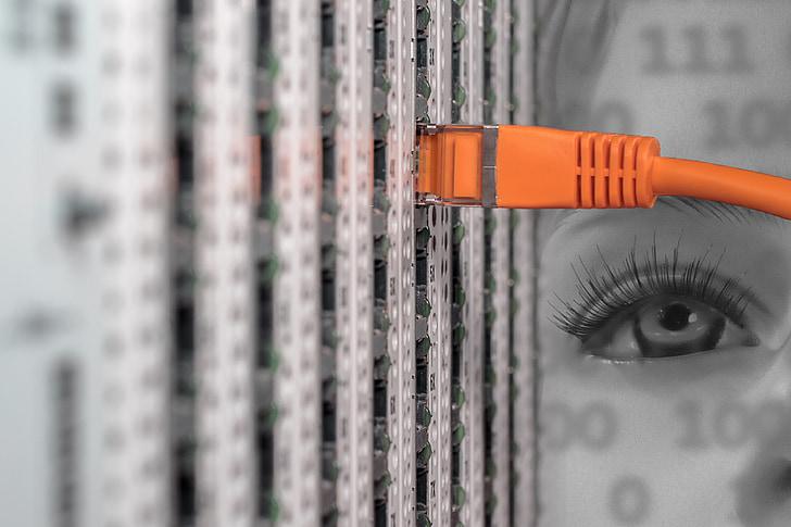 que, servidor, Gabinet de servidor, xarxa, cable, cable de parcel·la, cables de xarxa