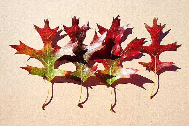 hojas, caída, otoño, temporada, no hay personas, estudio tiro, hoja