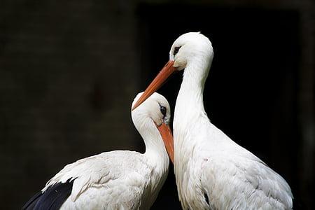 animals, beaks, birds, feathers, storks, wildlife, bird