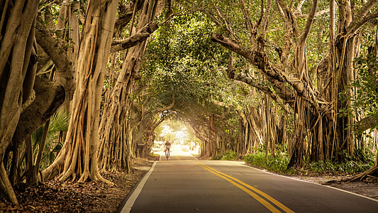 ceste, biciklist, stabla, overhanging, Banyan, bicikala, biciklizam