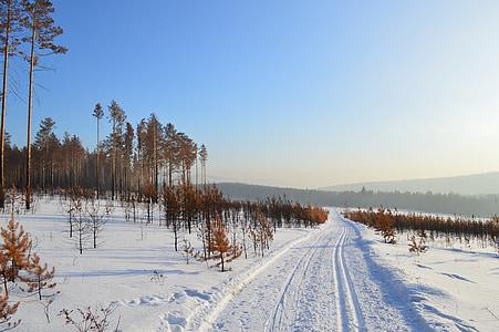 téli, Szibéria, hó, erdő, fák, Fringe, téli erdő
