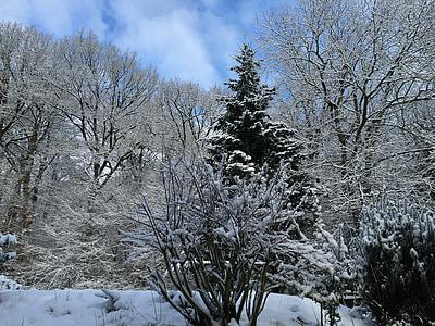 winter, landscape, winter forest, snow, trees, wintry, snowy