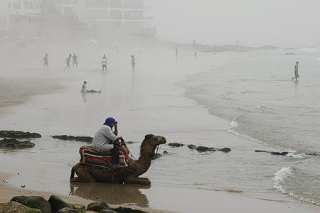 Camel, Beach, hmla, Maroko, Príroda, pobrežie, more