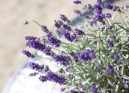 lavender, flower, nature, romanticism, decoration, purple flower, lavender in the garden
