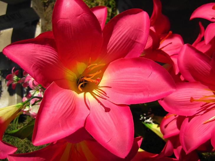 Hoa, Lily, Acapulco, Lilly, Hoa, bó hoa, thực vật