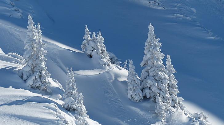 hivernal, neu, avets, l'hivern, paisatge de neu, arbres, bosc d'avets