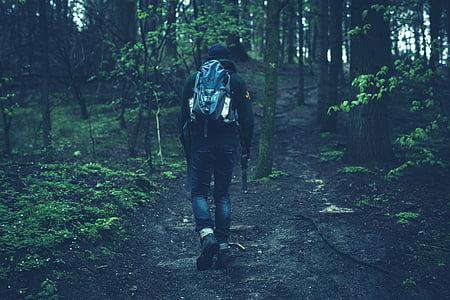 muž, chůze, uvnitř, Woods, lidé, fitness, pěší turistika