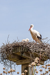 stork, nest, storchennest, breed, adebar, rattle stork, bird