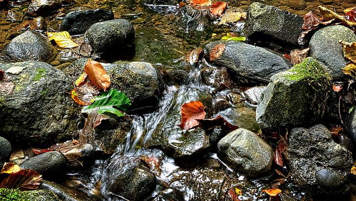 stenar, Bach, vatten, naturen, Stäng, Stream säng, Bach stenar