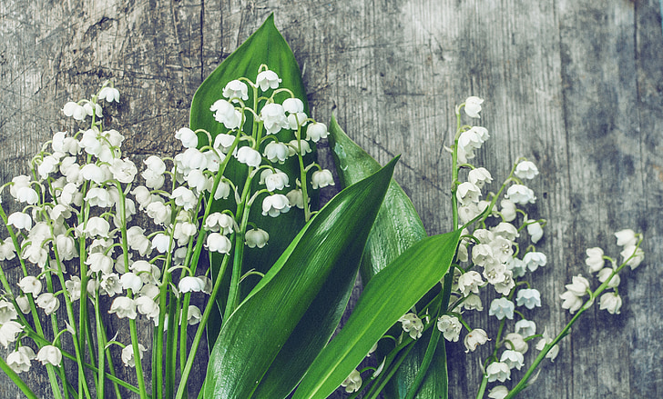 lilies of the valley, wood, blossom, botanic, botanical, bouquet, bunch