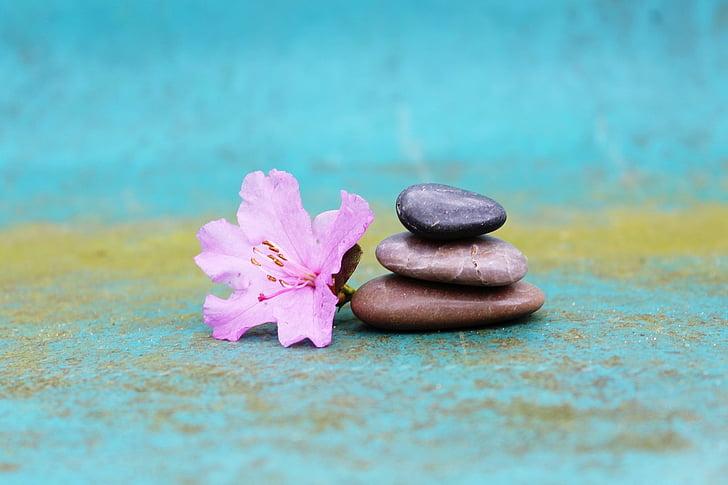 Azalea, pila de pedra, pila, pedres, flor, flor, Rosa