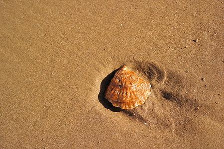 platja, closca, sorra, closca, sorra de la platja, Mar, natura