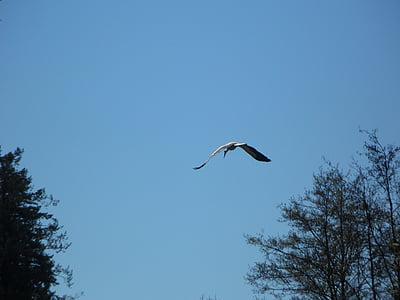щъркел, лети, птица, небе, мигриращи птици, Пролет, връщане