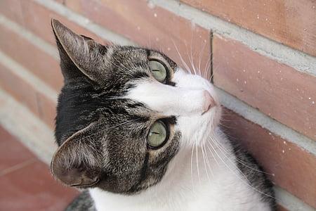 cats, animals, cat's eyes, green eyes, pet