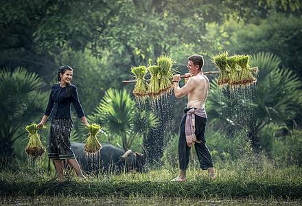 dla dorosłych, Rolnictwo, azjatycki, wsi, pielęgnować, kultury, ładny