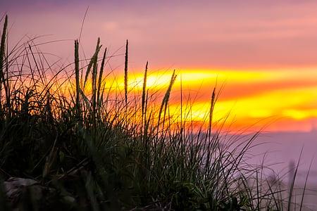 Dawn, skymning, gräs, makro, soluppgång, solnedgång, naturen