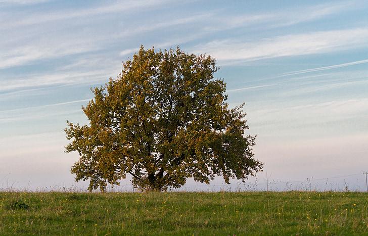 medis, Gamta, Poilsio, Harmonija, rudenį, lapai, lapų