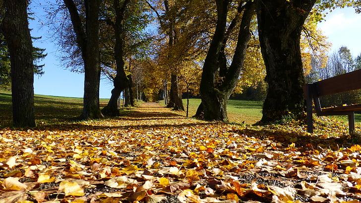 Allgäu, jeseň, listy, stromy, farebné