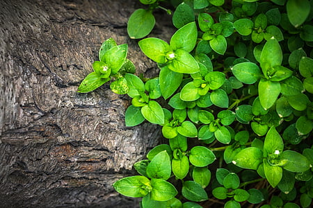 plantes, hwalyeob, fulla, natura, fusta, verd, textura