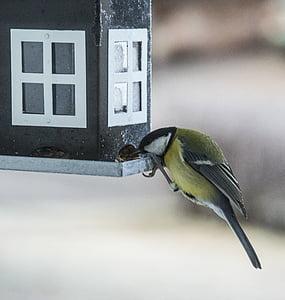 малки птици, птица маса, птица храна, птица, семена, хранене, голям синигер