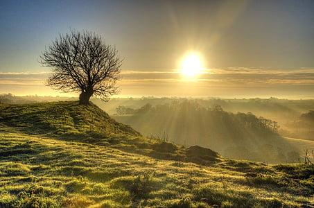 soluppgång, träd, ensam, solnedgång, landskap, Hill, naturen