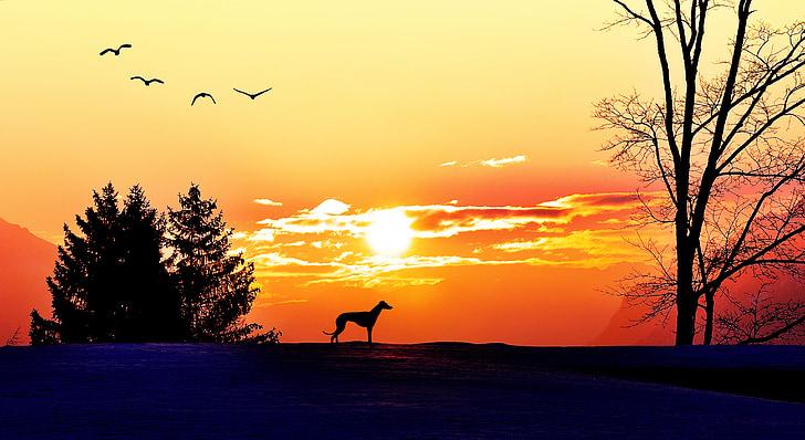 sunrise, morgenstimmung, sunlight, lighting, sun, trees, dog