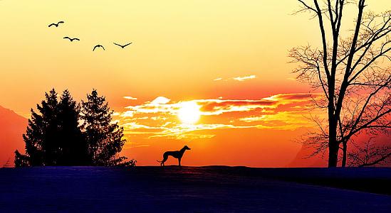 Alba, morgenstimmung, llum del sol, il·luminació, sol, arbres, gos