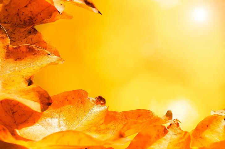 atstāj, rudens, rudens, filiāle, zāle, fons, saules gaismā