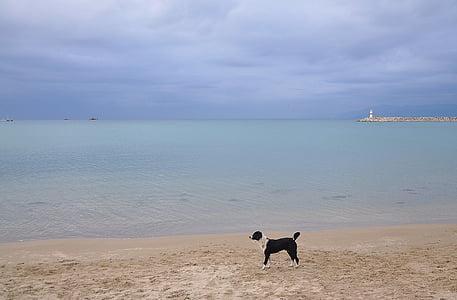 Mar, oceà, platja, vaixell de pesca, gos, blau, cel