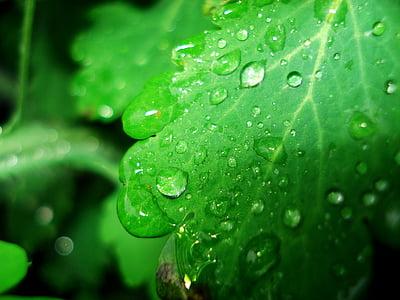 spring, dew, drop, water drops, natural, rain drops, after rain