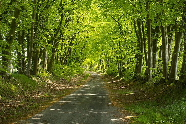 caminho da floresta, raio de sol, paisagem, humor