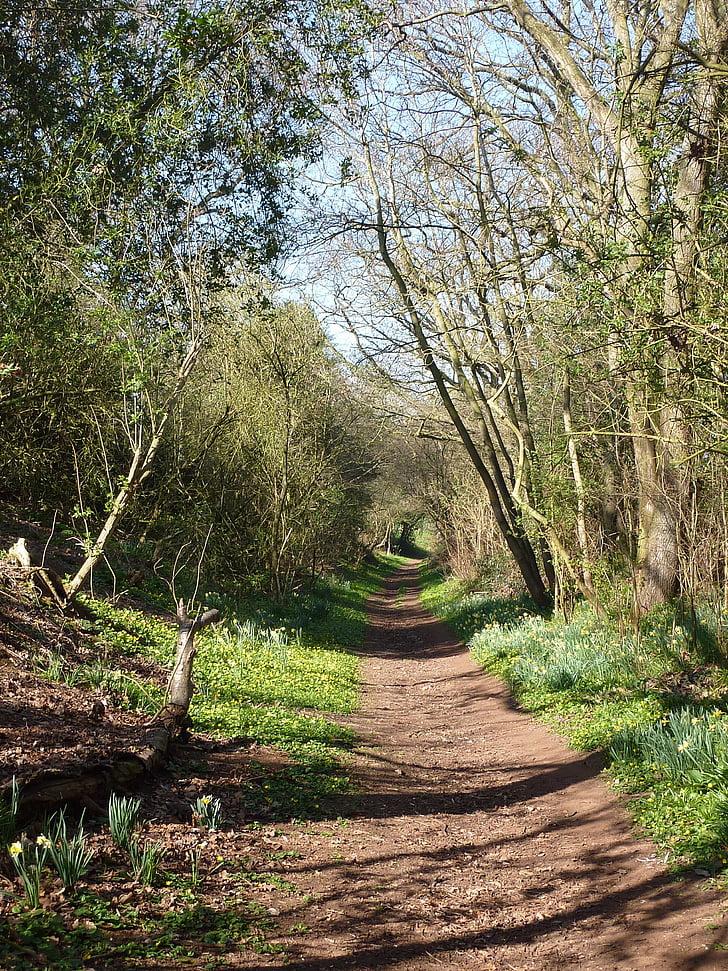 spring, woodland, outdoor