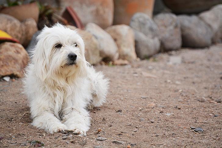 dog, animal, pet, friend, rest, pets, cute