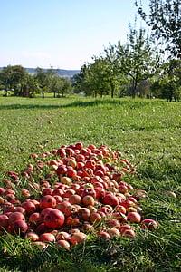 яблоко, фруктовый сад, непредвиденной, фрукты, красный, витамины, здоровые