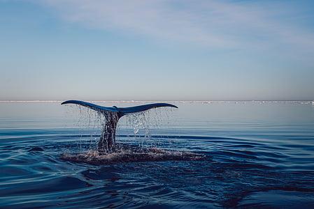 돌고래, 물, 바다, 바다, 구름, 스카이, 물 위에 수평선