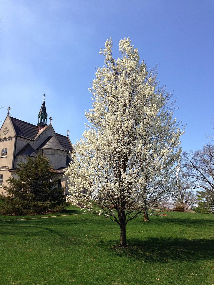 bloom, tree, blooming, springtime, outdoor, nature