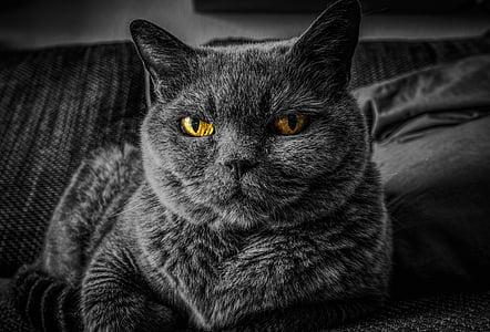 pisica, ochii pisica, ochi, animale, animal de casă, portret, Relaxaţi-vă