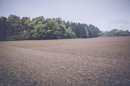 field, arable, landscape, agriculture, fields, nature, plant