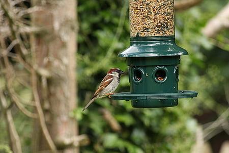 bird, birds, sparrow, feeder, feeding, nature