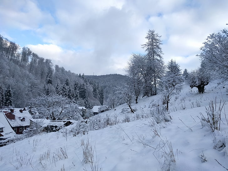 winter, snow, wintry, forest, nature, winter dream, landscape