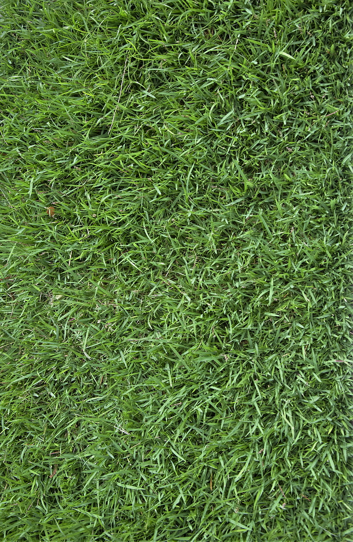 free photo grass texture background green grass hippopx grass texture background green grass